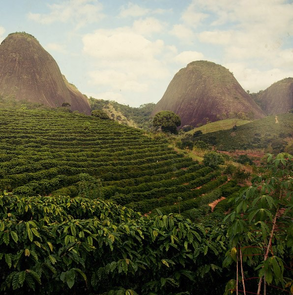 brazil coffee plantation